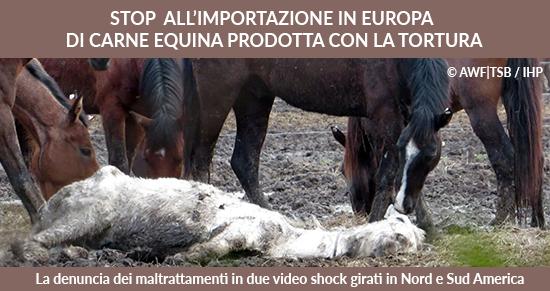 STOP all'importazione di carne equina in europa prodotta con la tortura